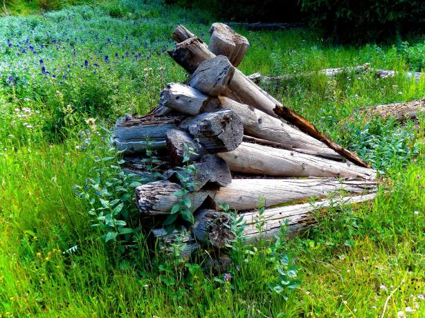 What looks like firewood to some is actually the remains of a historic cabin, and is protected under Federal law.