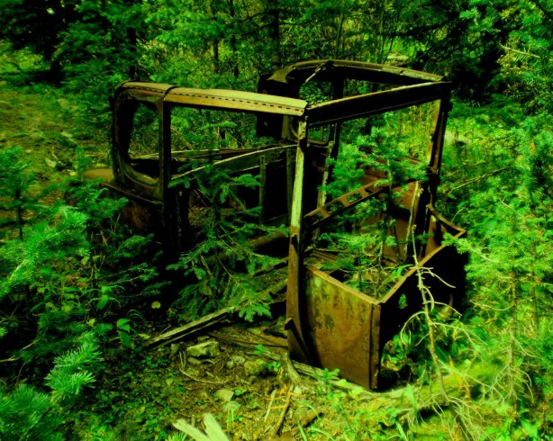 How long will this old Ford remain hidden in the pines untouched before someone finds it and steals it or shoots it full of holes?